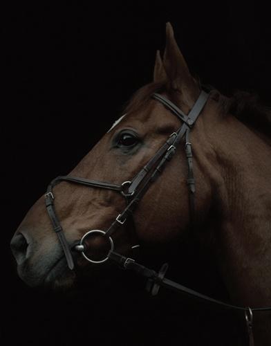 Julia Hetta horse