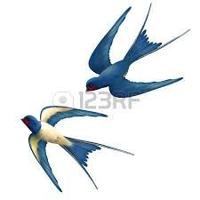 Image result for images migrating swallows