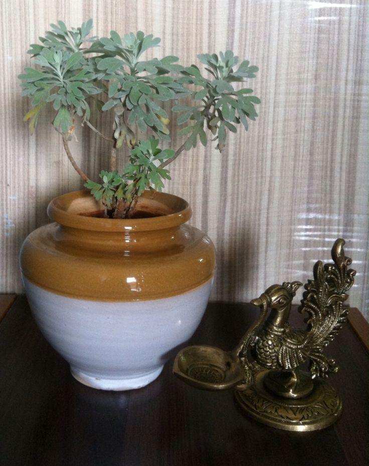 Ceramic pot and antique peacock diya