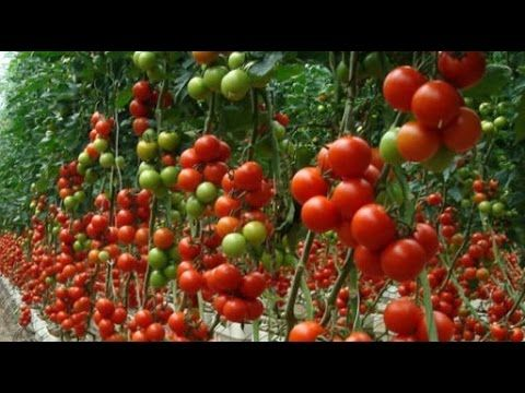amazing agriculture technology: Desert Agriculture technology in ISRAEL
