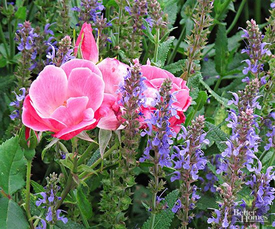 What blooms with what? That's one of the big questions we hear from our readers. So, we put together this list of perfect perennial pairings with some tips on how to combine these beauties for best effect.