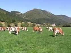 Fiche producteur | Produits frais, produits bio, livraison à domicile de vos courses - www.fermesdicietdailleurs.fr