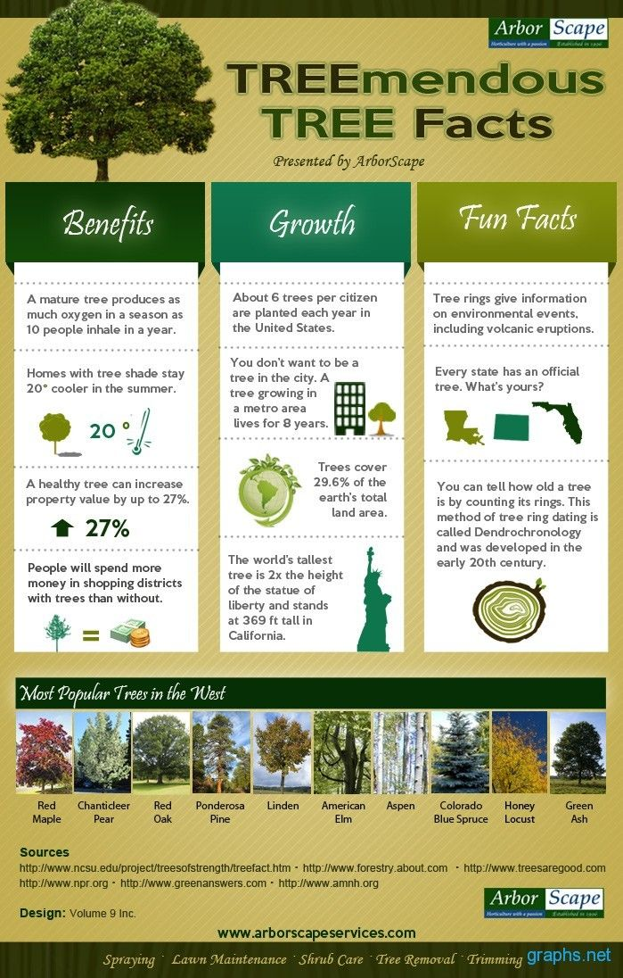 Scapes, Inc.says TREEmendous trees provide countless benefits for the mind, body and soul. @Scapes, Inc.