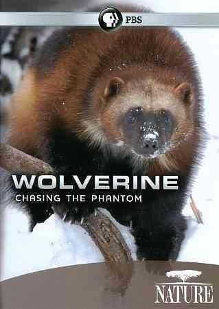 This documentary details the life of a wolverine, explaining how their day-to-day existence is only loosely related to the commonly-held wisdom that they are one of nature's fiercest killers.
