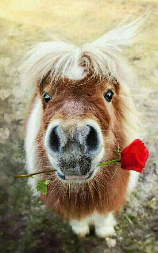 paarden kaart gefeliciteerd Gefeliciteerd | home | Pinterest   Gefeliciteerd, Tatoeage en Paarden paarden kaart gefeliciteerd