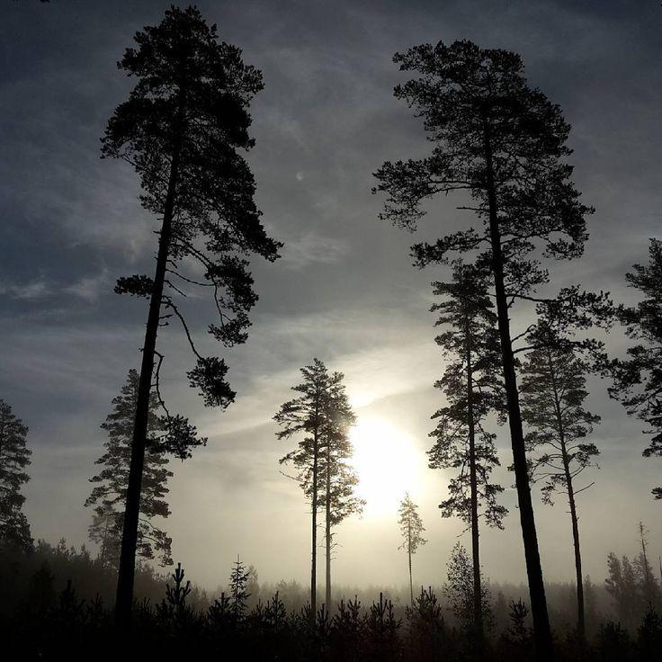 «#туман #утро #лес #природа #forest #nature #morning #fog #woods #trees #деревья #рассвет #рассветвлесу #sunrise #sunriseinforest»