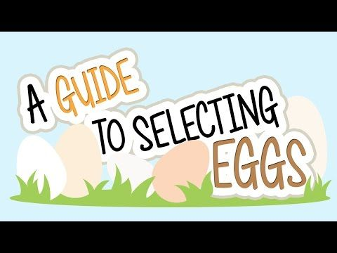 Egg Nutrition Facts & Information: A Guide to Selecting Eggs - YouTube