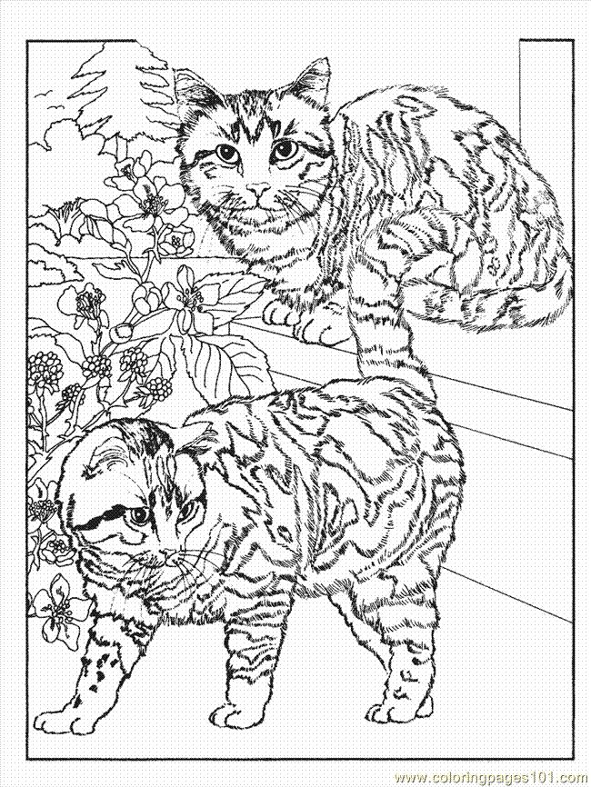 Cat1 12 Coloring Page