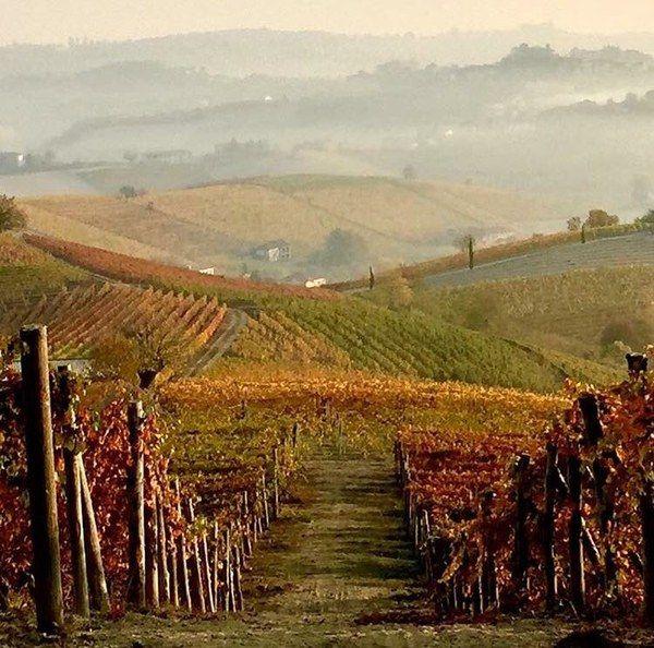 Autumn Colors @TuLangheRoero #visitpiemonte twitter.com/tulangheroero/…