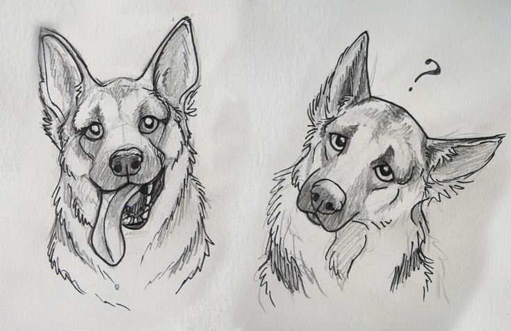 To be honest, I've never really been a big fan of German Shepards, but I am falling more and more in love with them^^ Maybe I haven't liked them that much before because they are so common? I tend ...