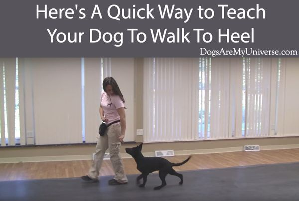 Teach Your Dog To Heel A Step By Step Guide Dog Training Tips