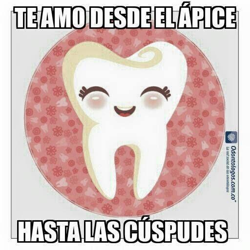 Desde el Ápice hasta la cúspide #OdontólogosCol #Odontólogos #Love