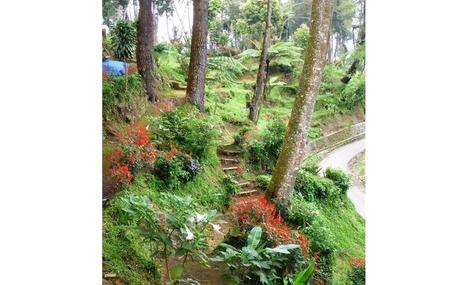 Gardens at Gundaling Hill