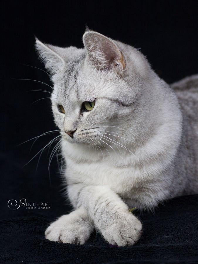Aniki (6 Monate alt)