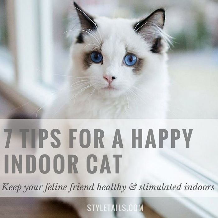 How to keep indoor cats happy and stimulated. #cats #pets