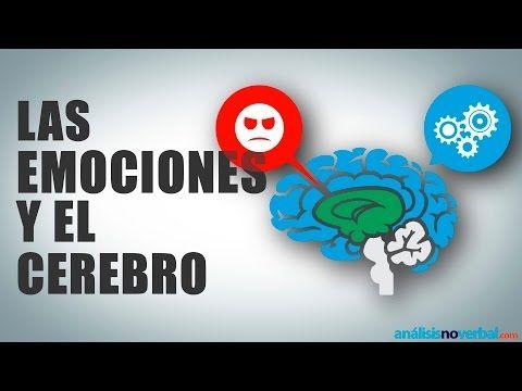 Las emociones y el cerebro - YouTube