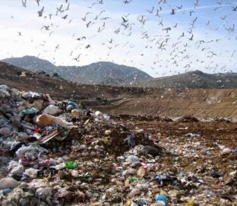 Terra dei Fuochi: divieto di vendita dei prodotti provenienti dalle aree a rischio