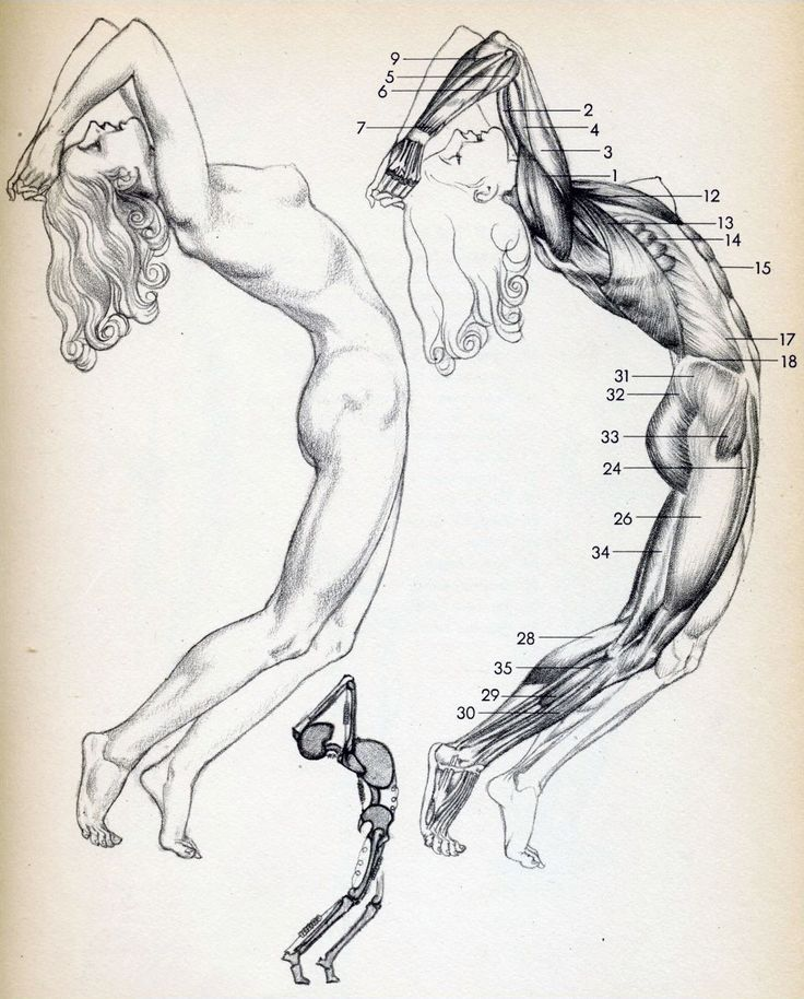 574 best drawing images on Pinterest   Art tutorials, Drawing ...