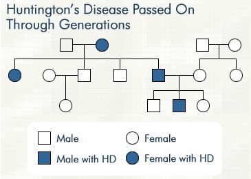the main characteristics of huntingtons disease Huntington's disease  during pregnancy: an analysis of patient characteristics clinical genetics  conditions/huntingtons-disease/pages/introduction.