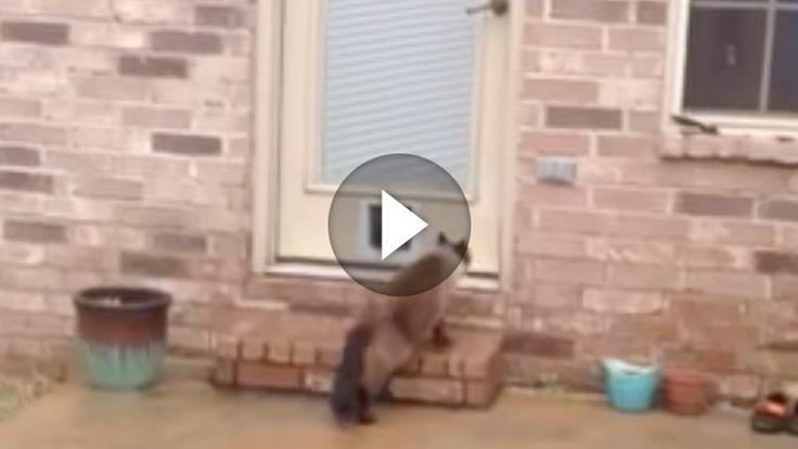 Da macht man sich als Katzenbesitzer extra die Mühe und baut seiner Katze eine Katzenklappe in die Tür und dann.. sowas! 😀 Katzen sind nun mal eigen und dafür lieben wir sie ja auch schließlich! 😉