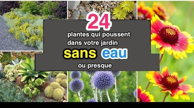 Toutes les plantes ont besoin d'eau pour survivre.Cependant, certaines plantes sont capables de se développer sans avoir besoin de beaucoup d'eau.Ces plantes sont idéales pour les r&eacu