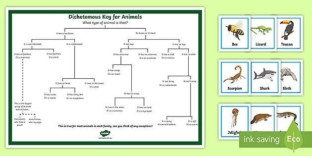 Dichotomous Key For Animals Matching Game Dichotomous Key Animal Matching Game Matching Games