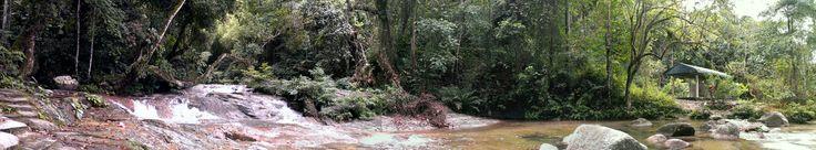 Rainforest - Malaysia.