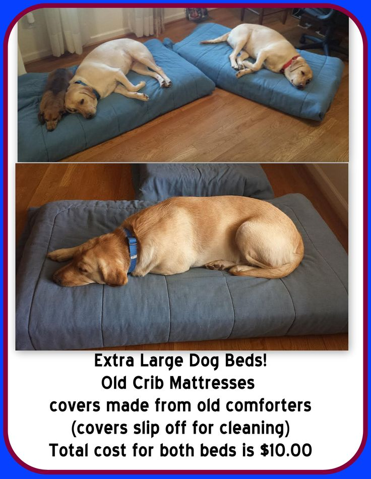 DIY XL dog bed - CHEAP