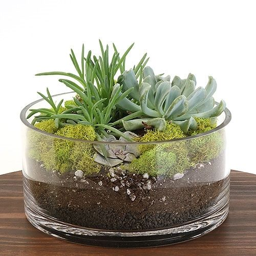 Spread your love for Eastern Leaf!  Succulent Dish Terrarium Kit