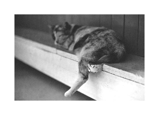 sleeping cat - taken by me