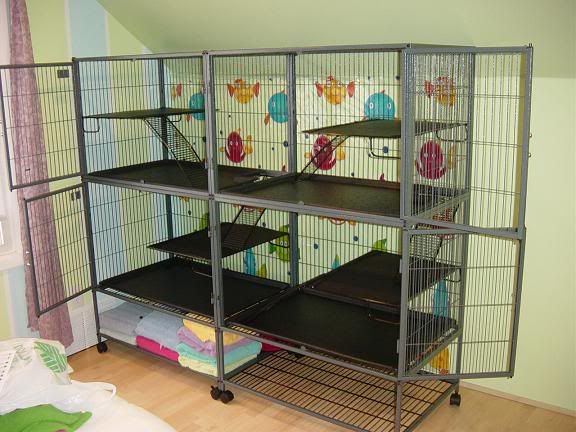 1000+ Ideas About Ferret Cage On Pinterest