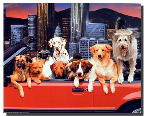 This is a wonderful wall poster for your kid's room décor which transform the look of your kid's room. This beautiful poster adds a fun touch and humor to your kid's room. This poster Perfect for all dogs lovers. We ensure the high degree of color accuracy and paper quality. This poster goes well in any kind of décor style.