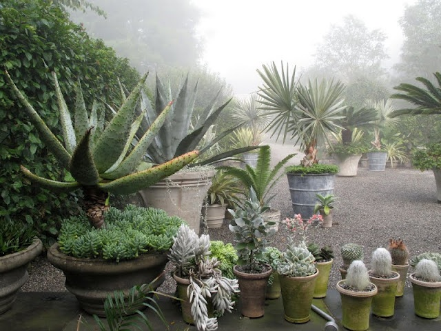 Martha Stewart's Farm: Plants Can, Succulents Can, Stewart Farms, Gardens Planters, Cantito Corner, Martha Stewart, Tropical Gardens, Martha Moments, Patio Plants