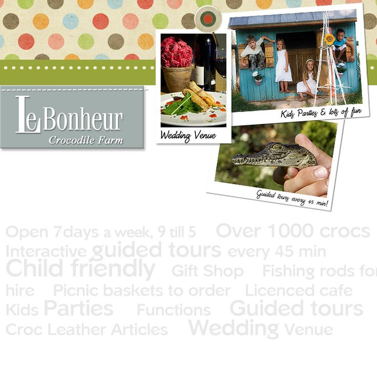 Visit Le Bonheur Crocodile Farm for a guided tour of the croc pond which is home to over 1000 crocodiles! It's a child-friendly, guided, interactive tour. #Family #CapeTown