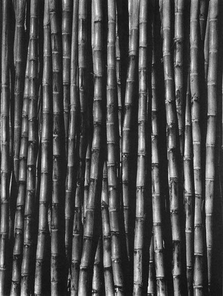 Фотоискусство Тины Модотти: 9. Сахарный тростник, 1927