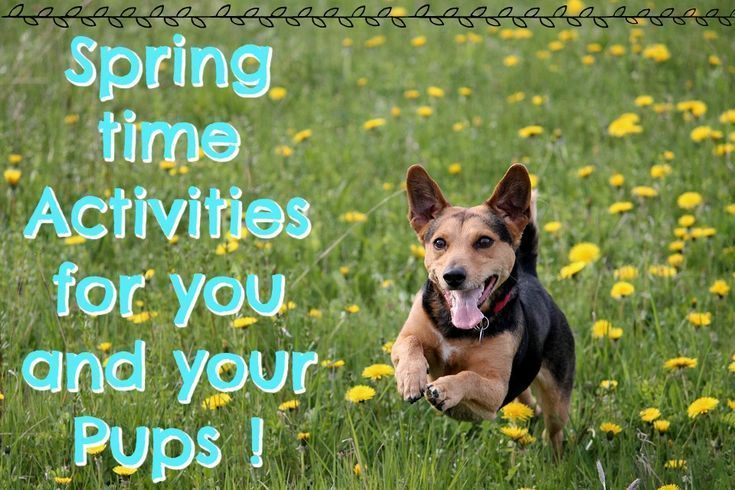 Spring Activities For You Your Dogs Happy Animals Your Dog
