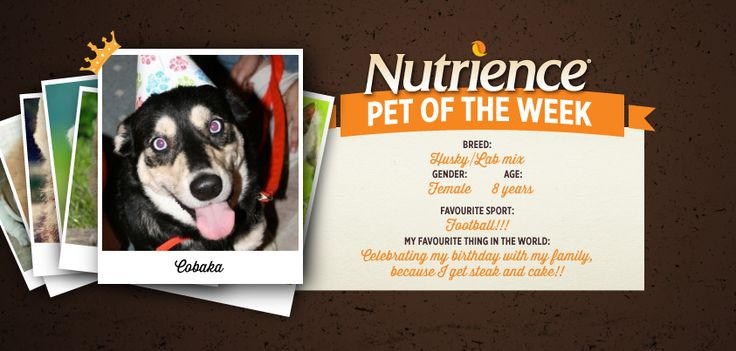 Cobaka is always ready to have a good time, and that's why she's this week's #Nutrience Pet Of The Week! Submit yours here: http://bit.ly/PetOfWeek #dog #dogs #cute