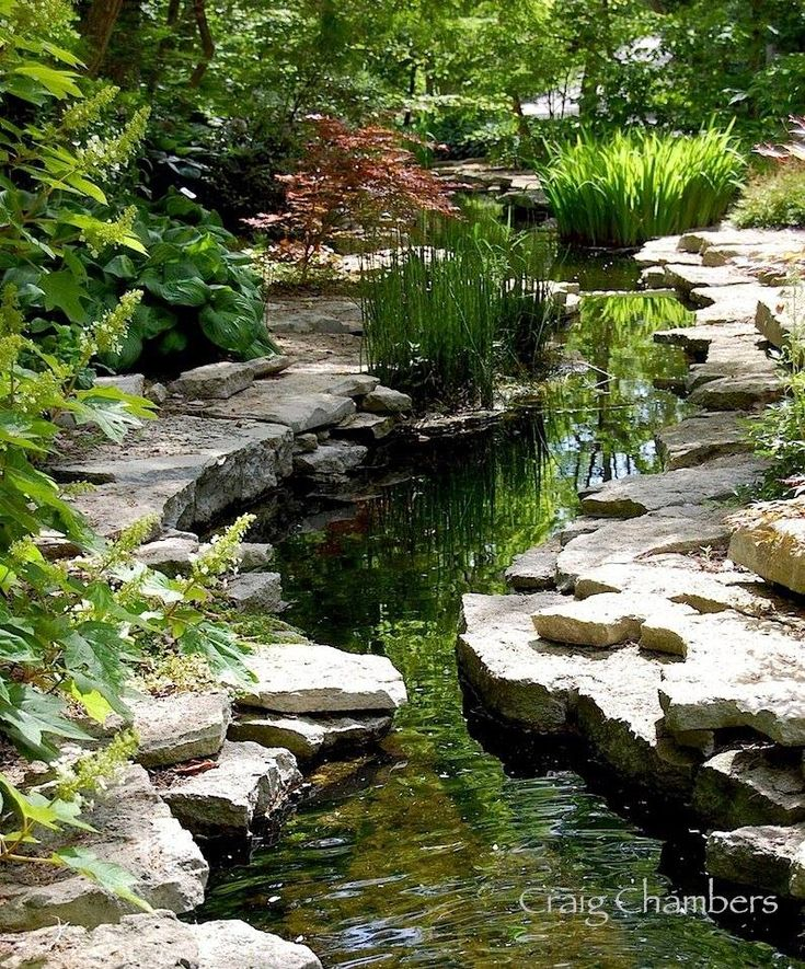 30 Beautiful Backyard Ponds And Water Garden Ideas: 186 Best Images About Spring Fed Natural Pond On Pinterest