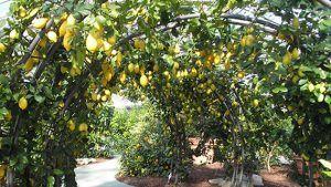 Andar per vivai: Pistoia | Italian Botanical Trips