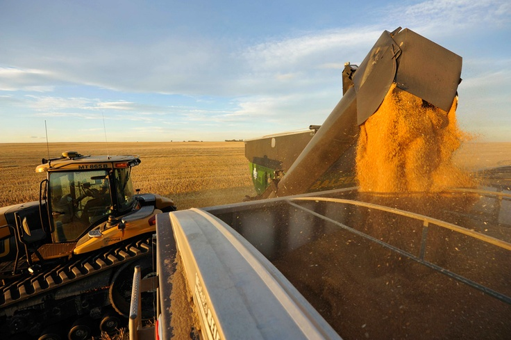 Wheat is dumped into a grain truck for transport. The biggest importer of Canada wheat annually is often the United States, itself a major exporter. Canadian farmers have also increased exports to such nations as Iraq and Saudi Arabia