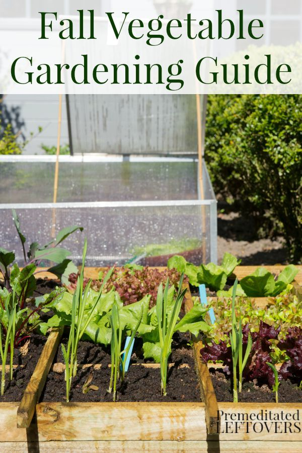 1000 Images About How Does Her Garden Grow On Pinterest Seed Starting Seeds And Vegetable Garden