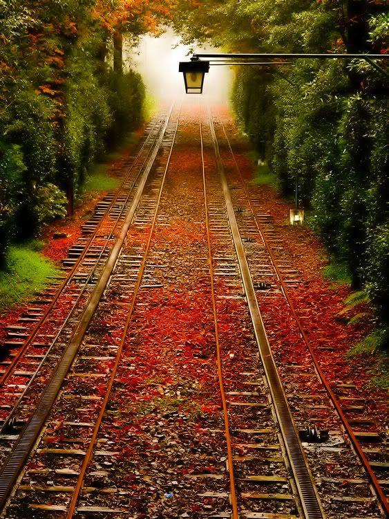Tem coisa mais linda que uma tarde de outono?