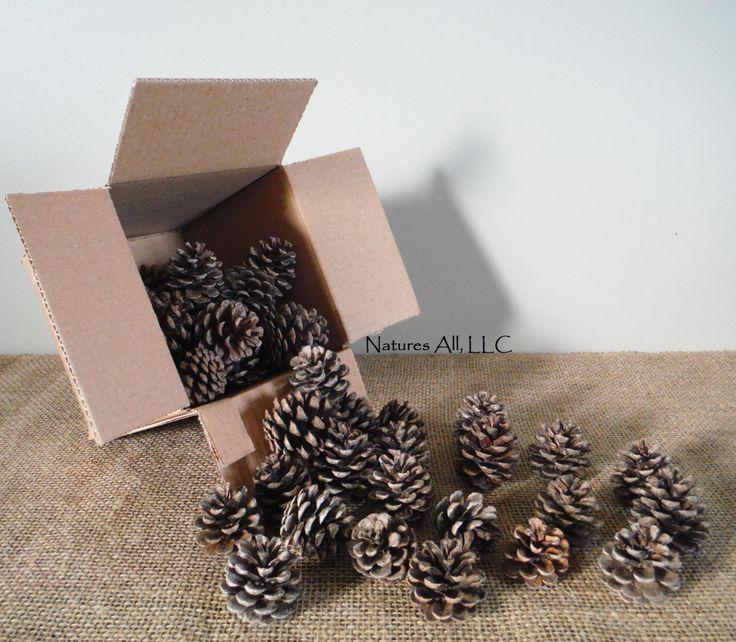 decorative pine pine cones40 piece boxfor rustic wedding u0026