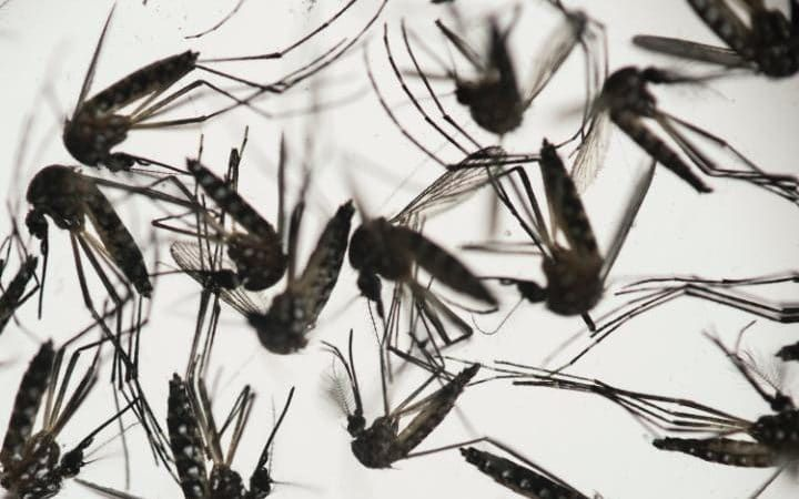 Zika Virus May Cause Infertility In Men - https://outoftheboxscience.com/health/diseases/zika-virus-may-cause-infertility-men/