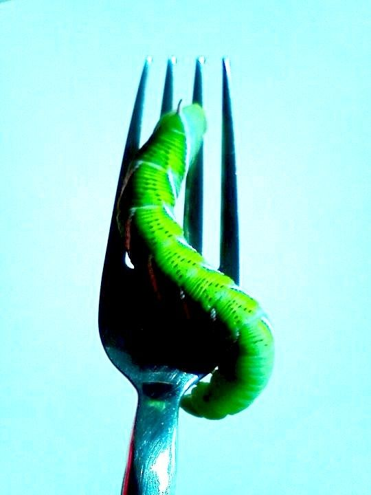 The Future of Food: 25 Edible Insects