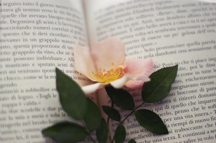 The secret language of flowers. by Caterina Gualtieri on 500px