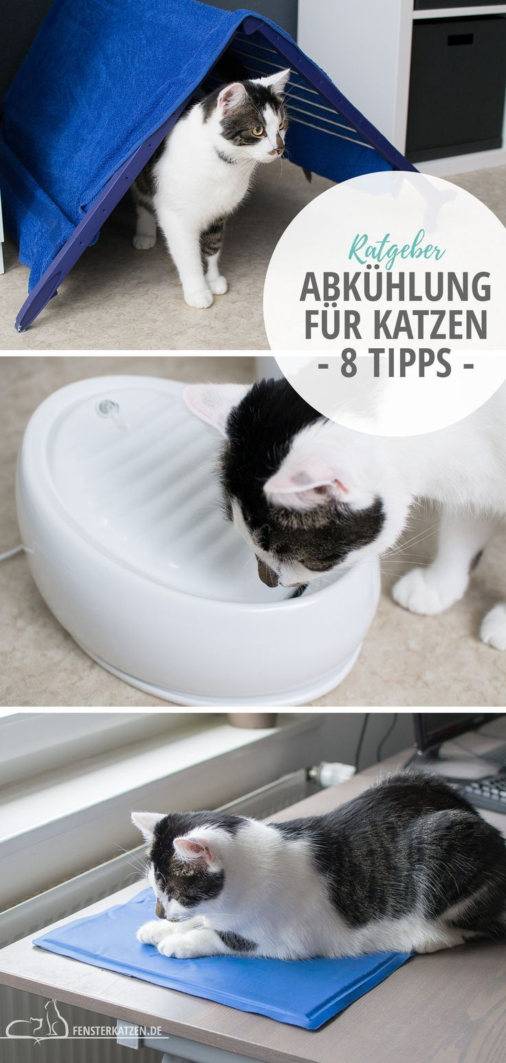 Cooling down for cats – these 8 tips help with heat