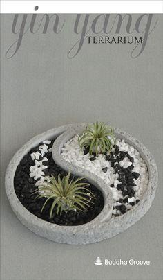 Yin Yang Air Plant Zen Terrarium Ideas Pinterest Jardineria En