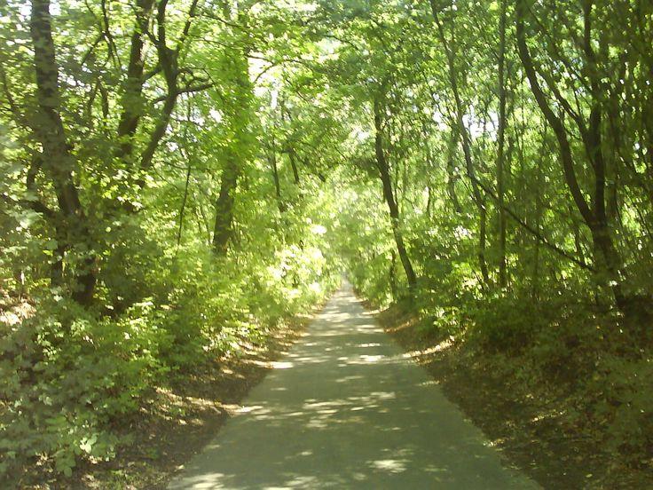 way, road, trees, light, beautiful day, Kmeťovo (Slovakia) :)