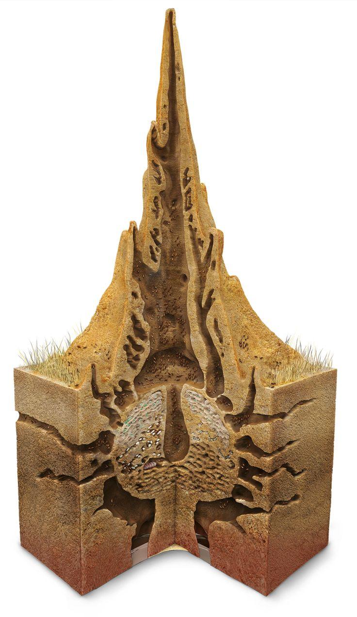 wk 20 DK termite mound roa8nb